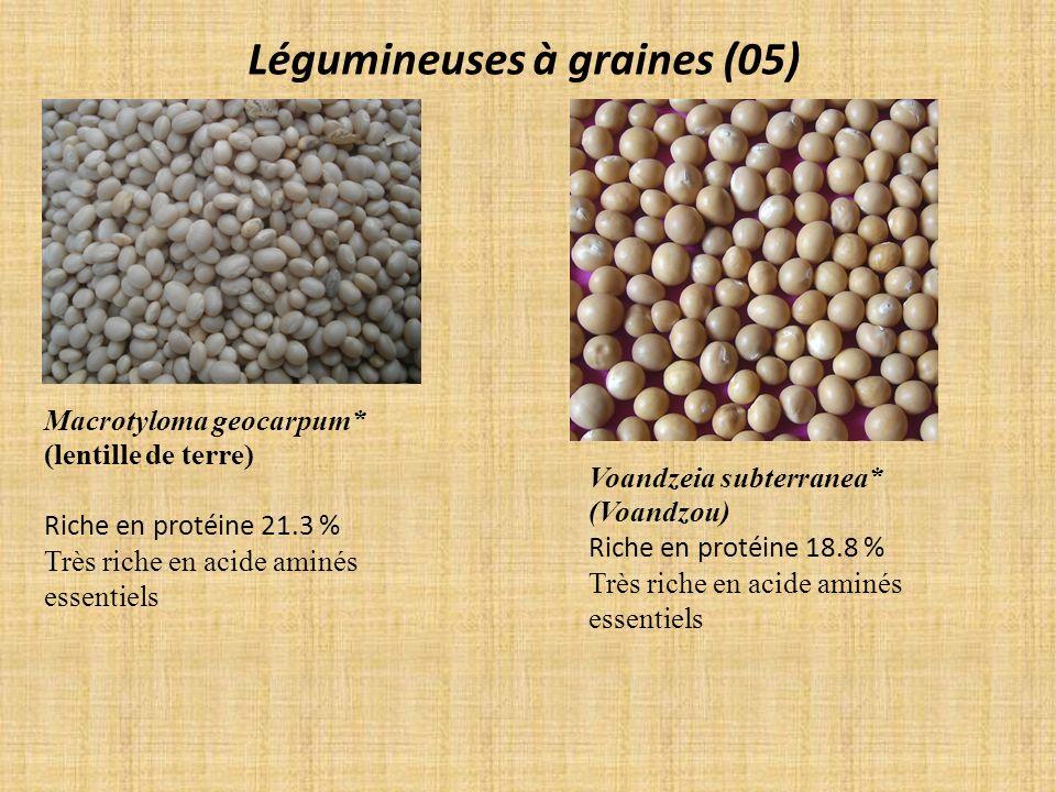 Légumineuses à graines (05)