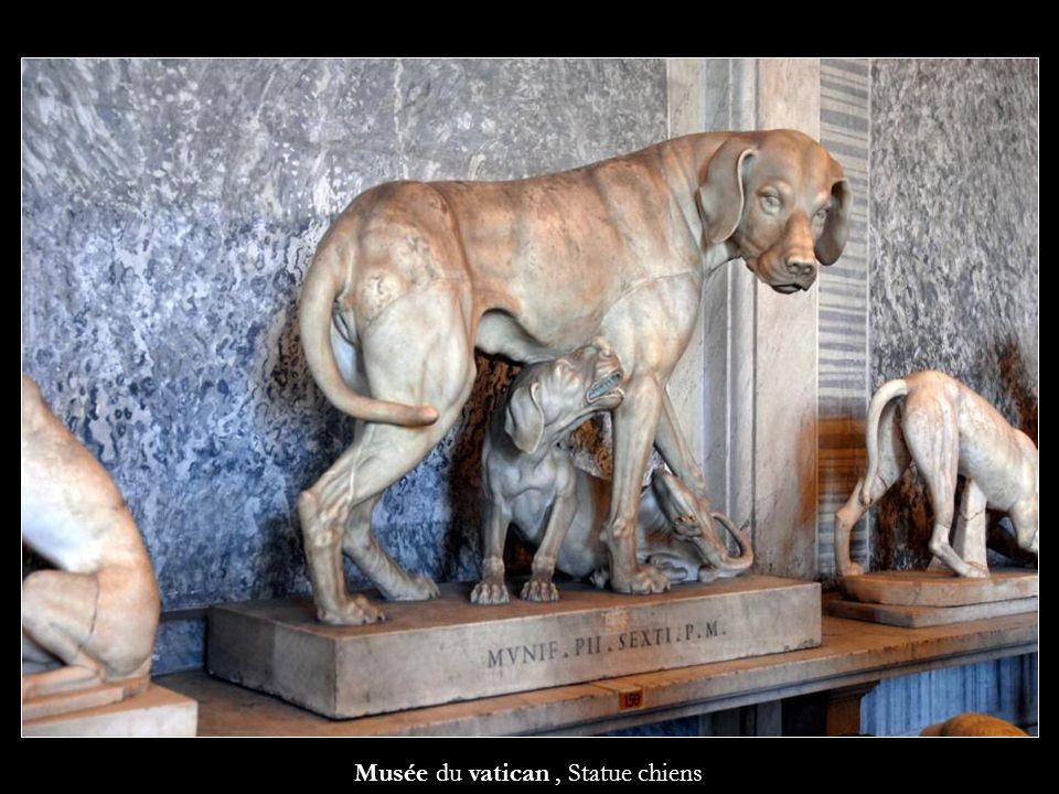Musée du vatican , Statue chiens