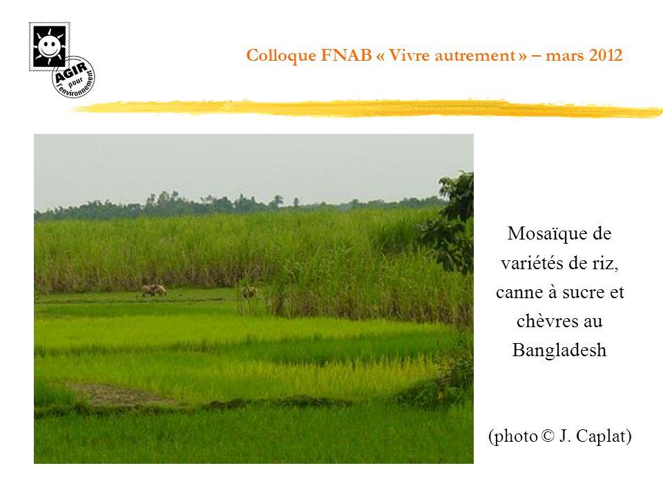 Mosaïque de variétés de riz, canne à sucre et chèvres au Bangladesh