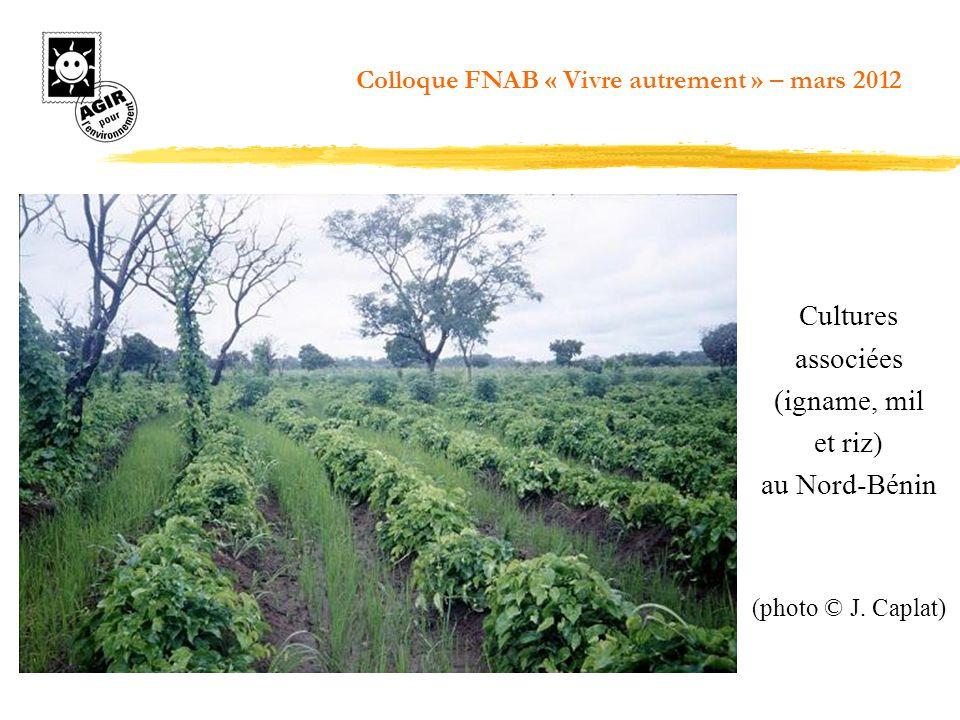 Cultures associées (igname, mil et riz) au Nord-Bénin