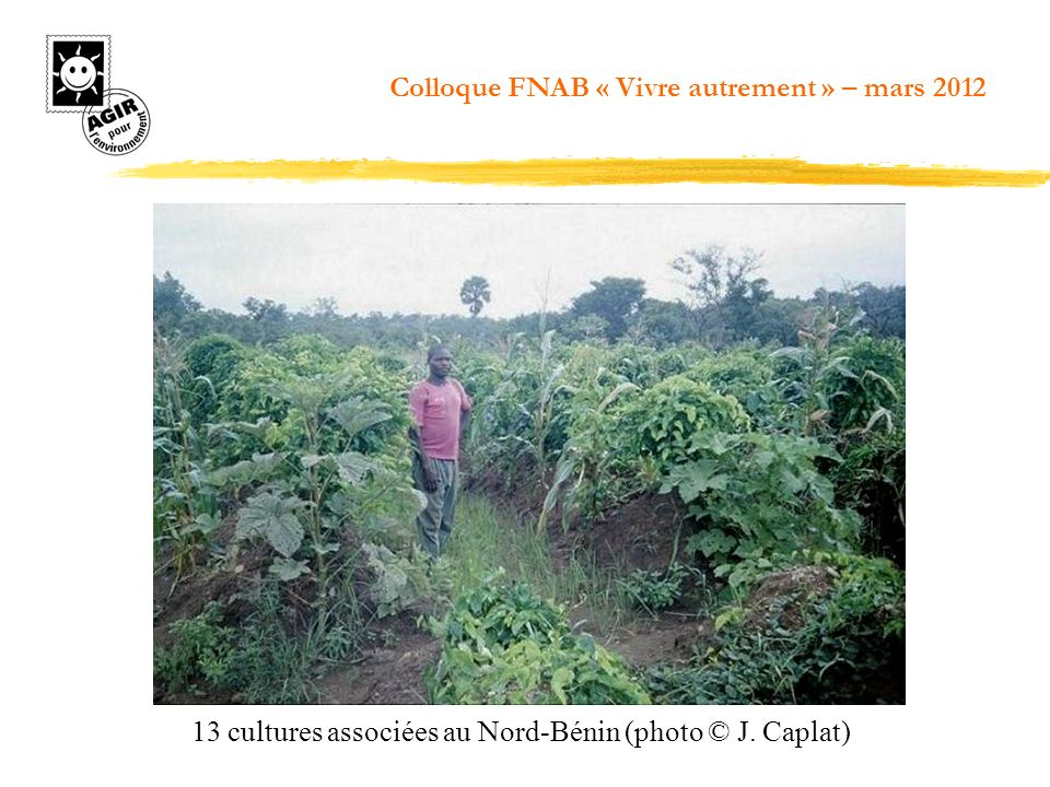 13 cultures associées au Nord-Bénin (photo © J. Caplat)
