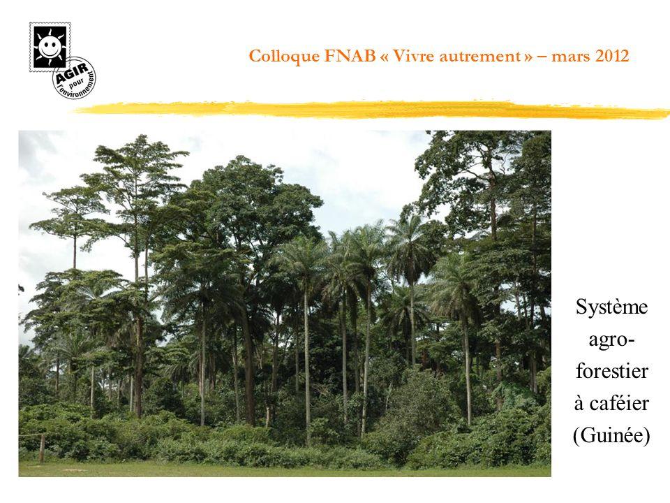 Système agro- forestier à caféier (Guinée)
