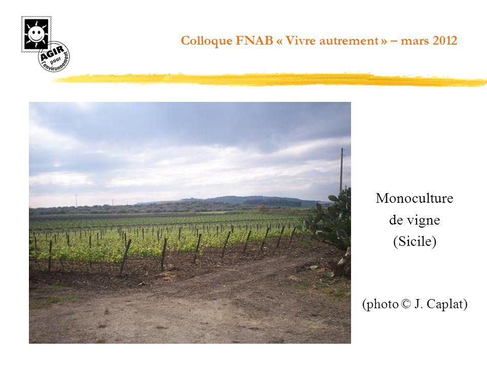 Monoculture de vigne (Sicile)