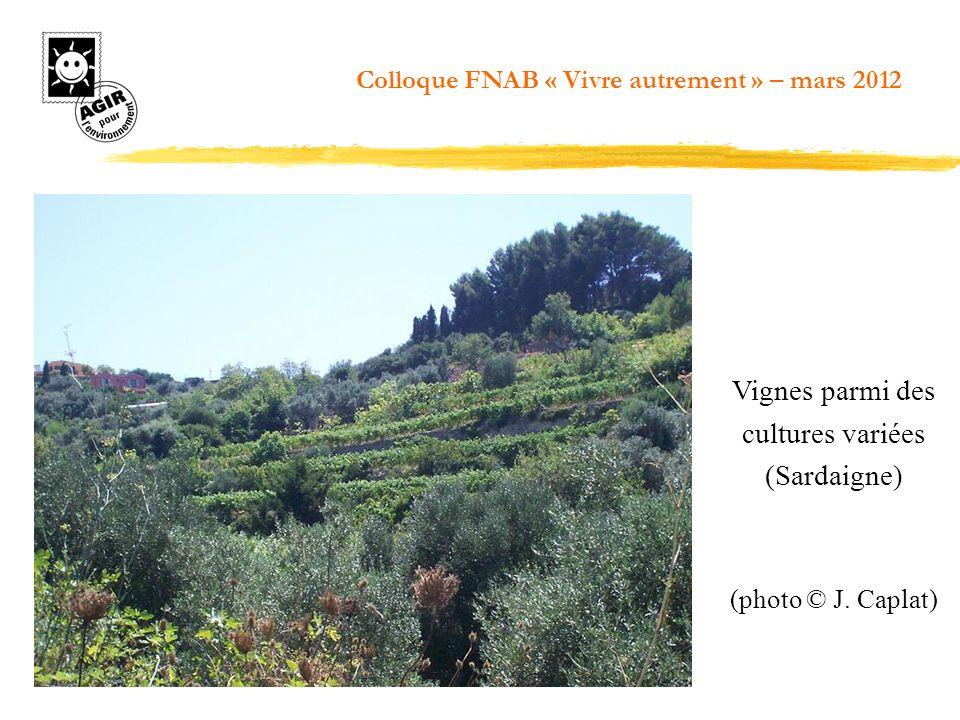 Vignes parmi des cultures variées (Sardaigne)