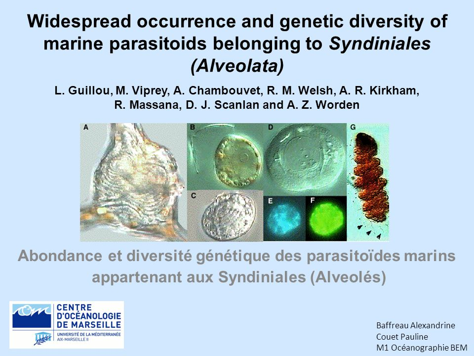 Widespread occurrence and genetic diversity of marine parasitoids belonging to Syndiniales (Alveolata)