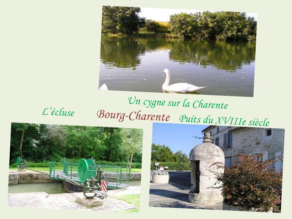 …;;;;;;;;;;;;;;;;;;;;;;;;;;;;;;;;;; Un cygne sur la Charente