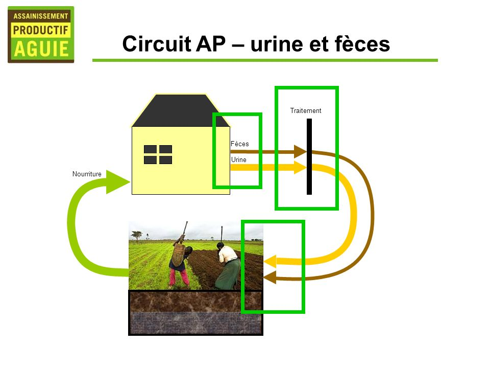 Circuit AP – urine et fèces