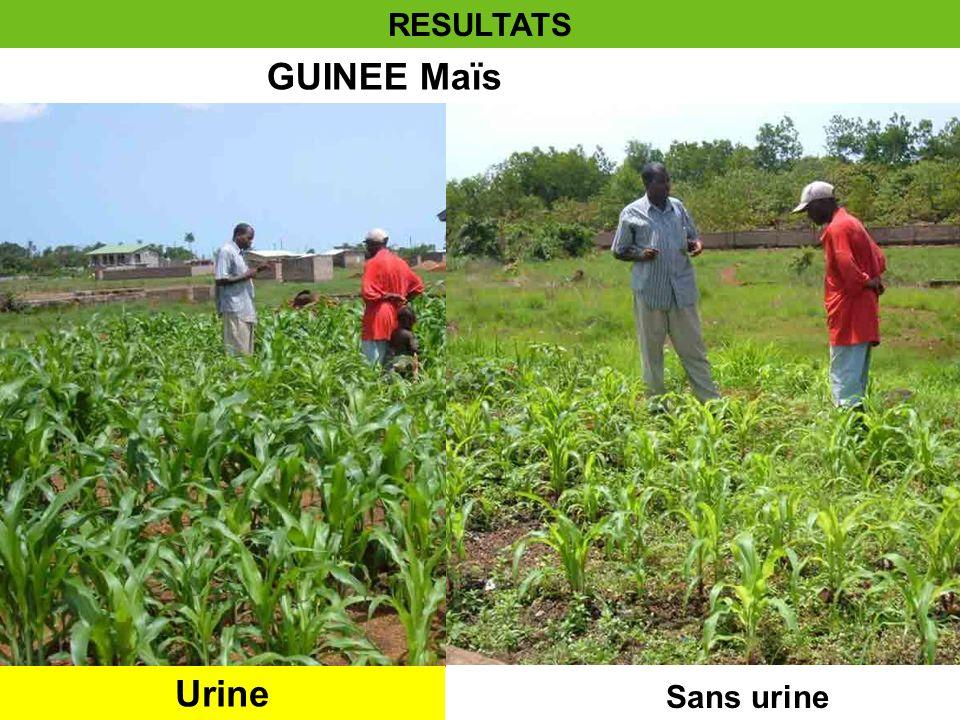 RESULTATS GUINEE Maïs Urine Sans urine