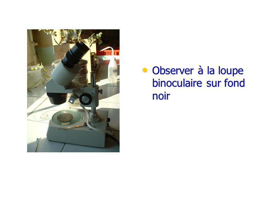 Observer à la loupe binoculaire sur fond noir