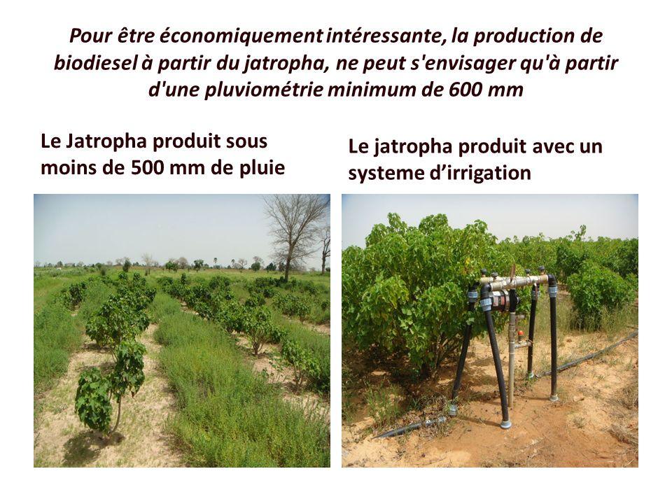 Pour être économiquement intéressante, la production de biodiesel à partir du jatropha, ne peut s envisager qu à partir d une pluviométrie minimum de 600 mm