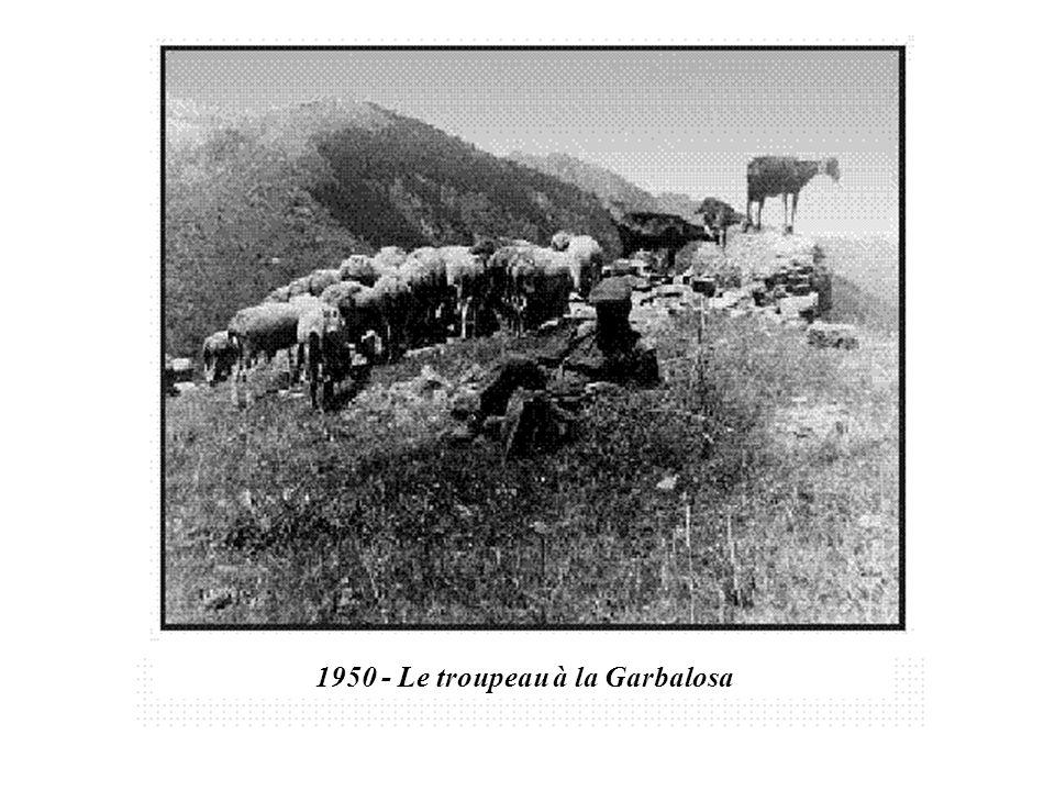 1950 - Le troupeau à la Garbalosa