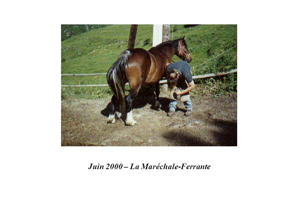 Juin 2000 – La Maréchale-Ferrante