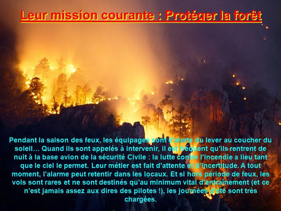 Leur mission courante : Protéger la forêt