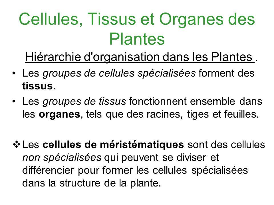 Cellules, Tissus et Organes des Plantes