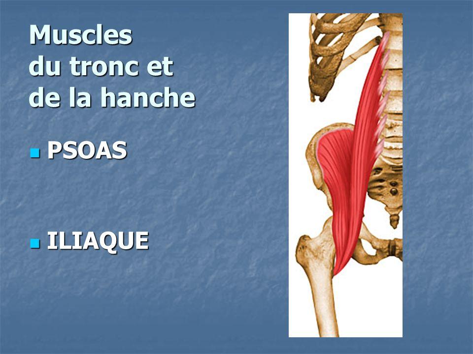 Muscles du tronc et de la hanche