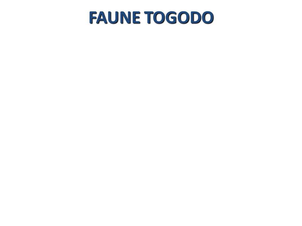 FAUNE TOGODO