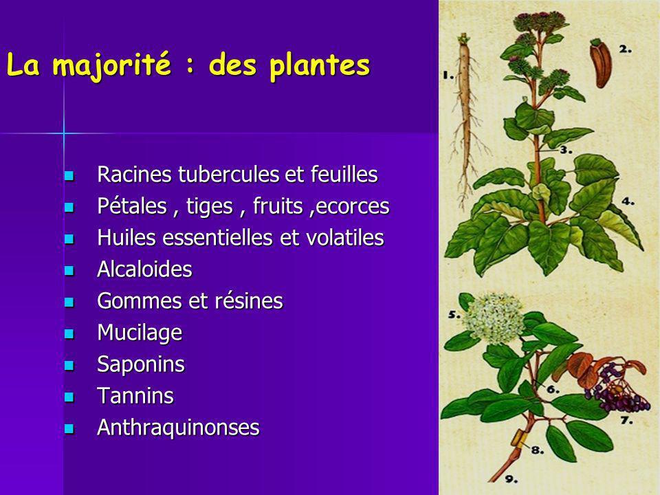 La majorité : des plantes