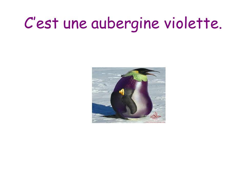 C'est une aubergine violette.