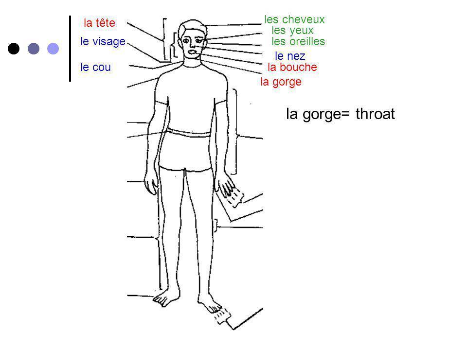 la gorge= throat les cheveux la tête les yeux le visage les oreilles
