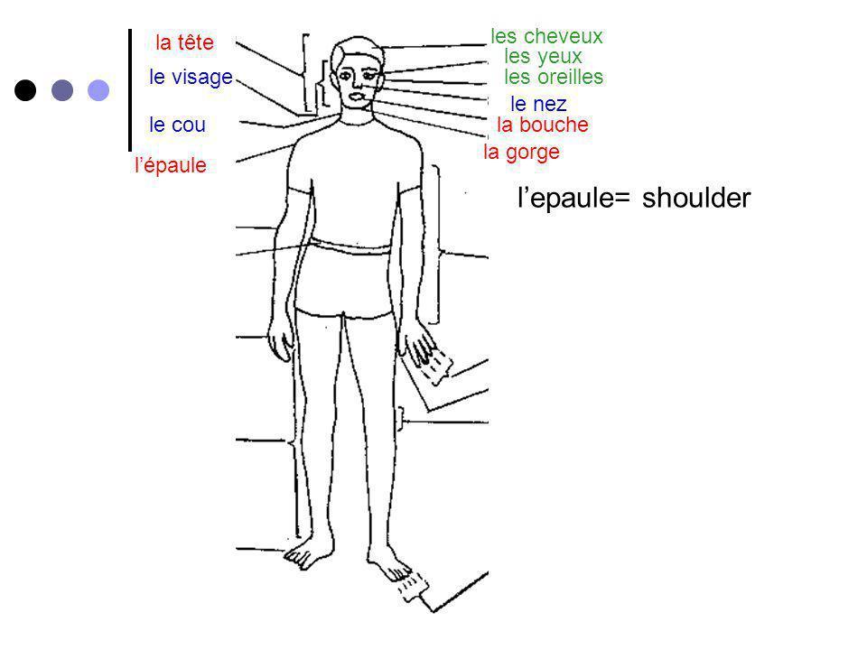 l'epaule= shoulder les cheveux la tête les yeux le visage les oreilles