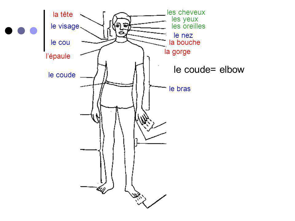 le coude= elbow les cheveux la tête les yeux le visage les oreilles