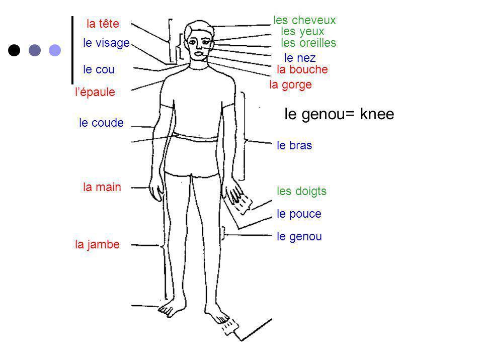 le genou= knee les cheveux la tête les yeux le visage les oreilles