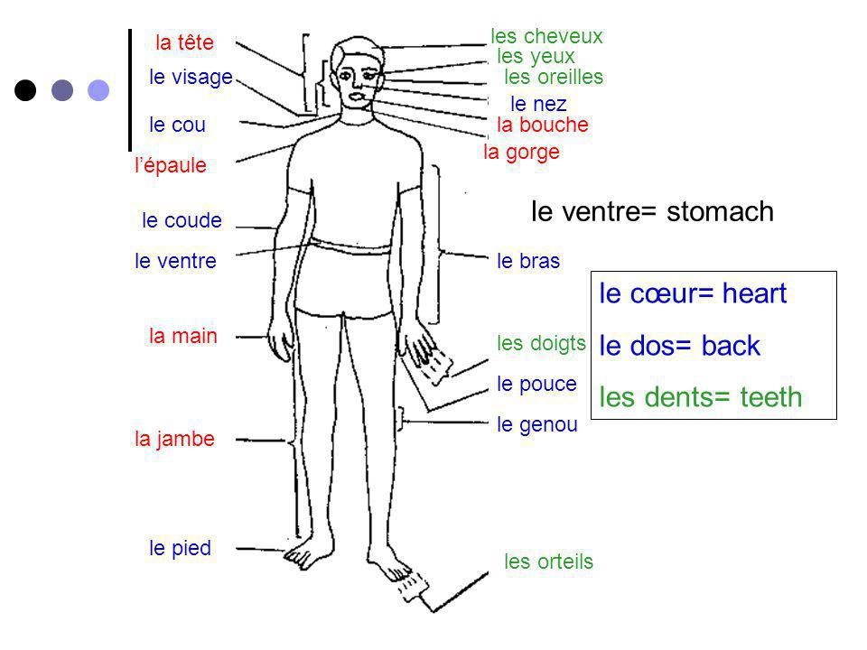le ventre= stomach le cœur= heart le dos= back les dents= teeth