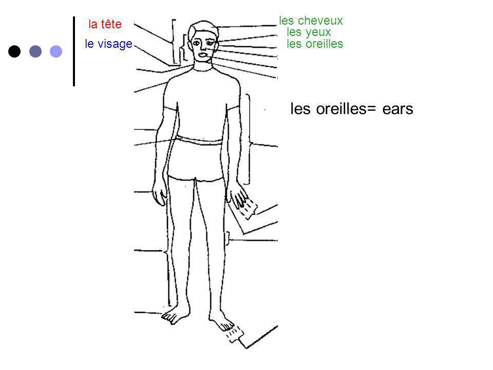 les oreilles= ears les cheveux la tête les yeux le visage les oreilles