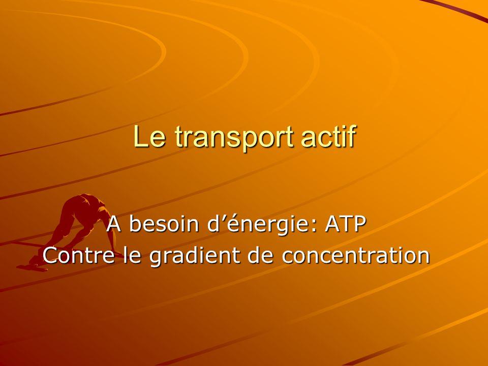 A besoin d'énergie: ATP Contre le gradient de concentration
