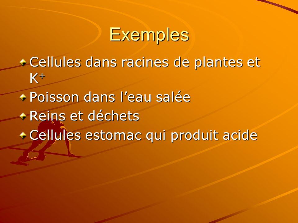 Exemples Cellules dans racines de plantes et K+