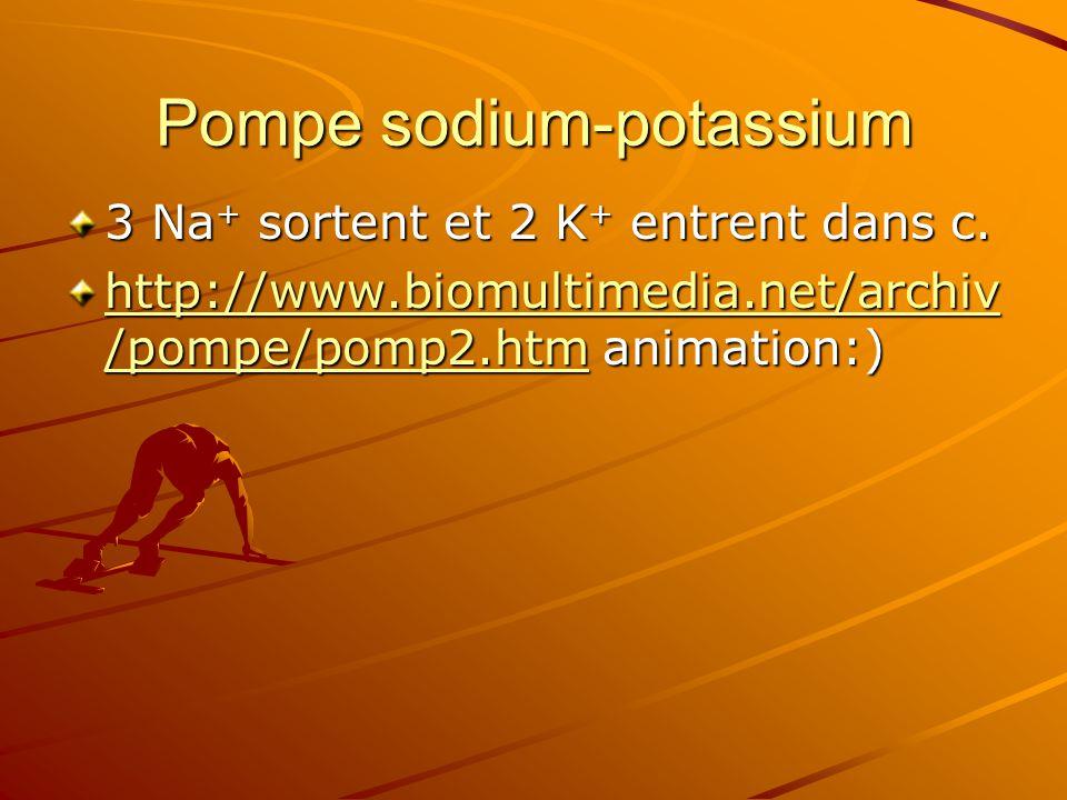 Pompe sodium-potassium