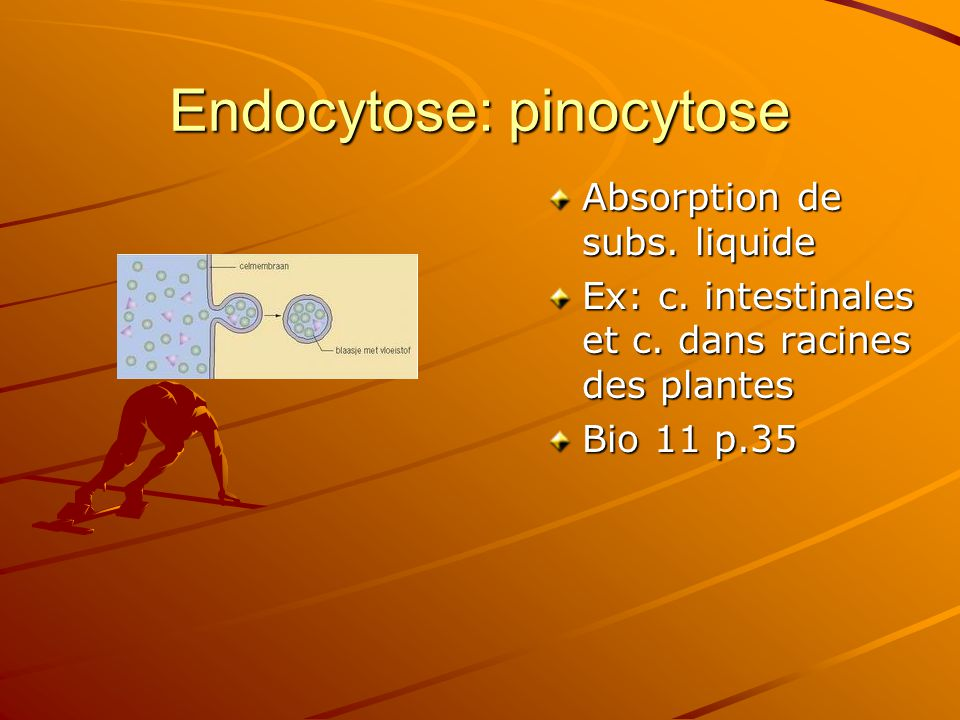 Endocytose: pinocytose
