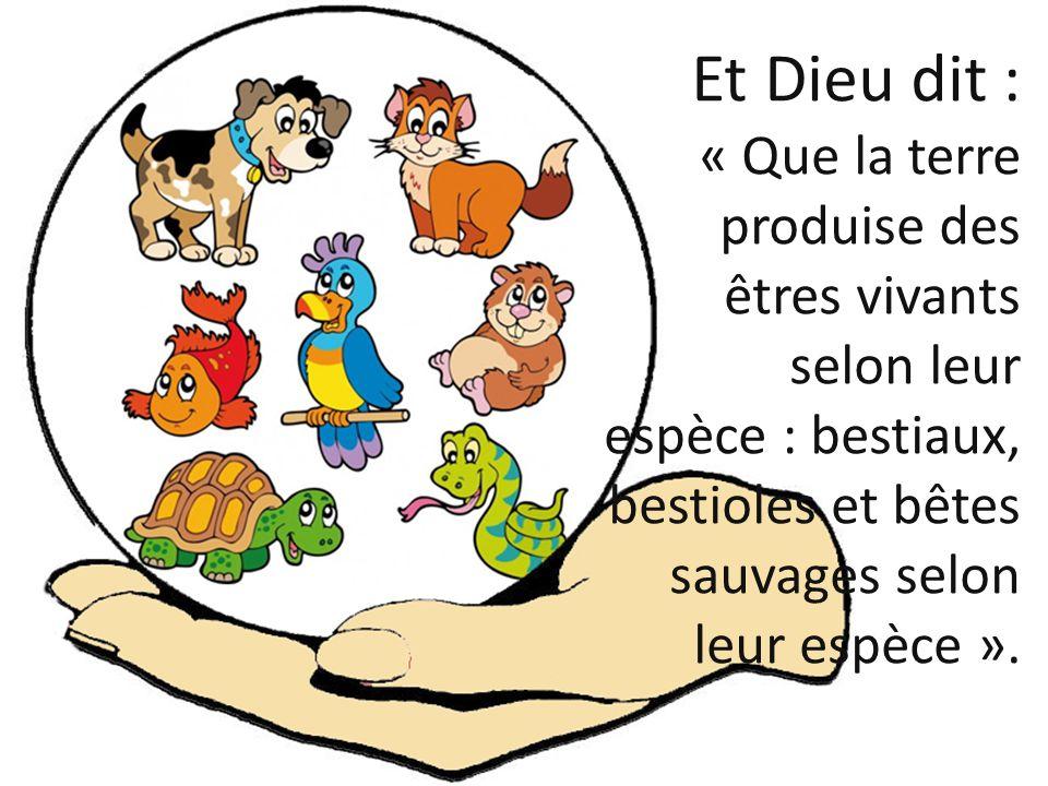 Et Dieu dit : « Que la terre produise des êtres vivants selon leur espèce : bestiaux, bestioles et bêtes sauvages selon leur espèce ».
