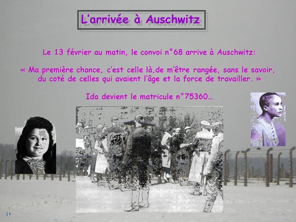 L'arrivée à Auschwitz Le 13 février au matin, le convoi n°68 arrive à Auschwitz: