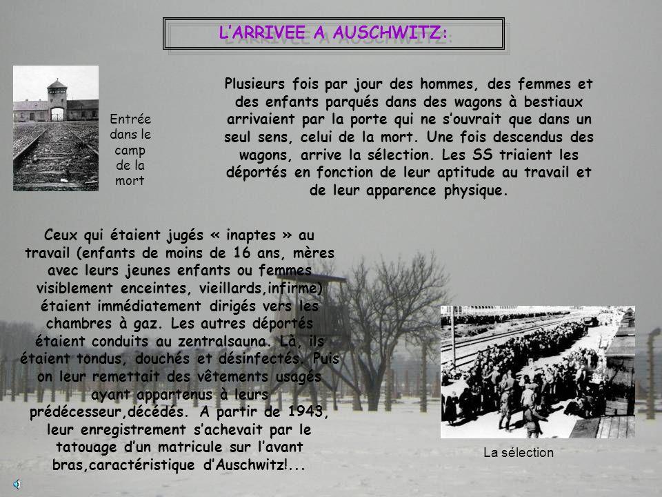 L'ARRIVEE A AUSCHWITZ: