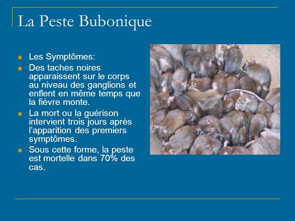 La Peste Bubonique Les Symptômes: