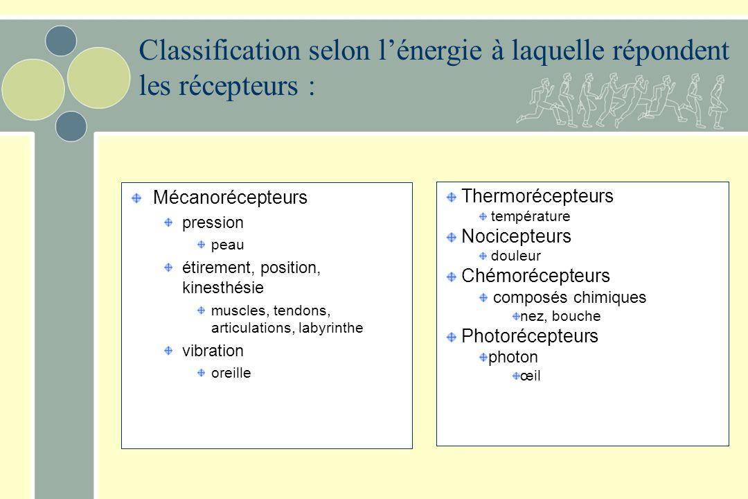 Classification selon l'énergie à laquelle répondent les récepteurs :