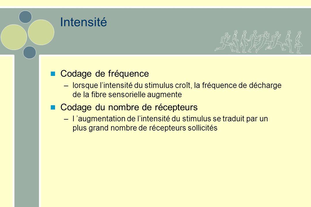 Intensité Codage de fréquence Codage du nombre de récepteurs
