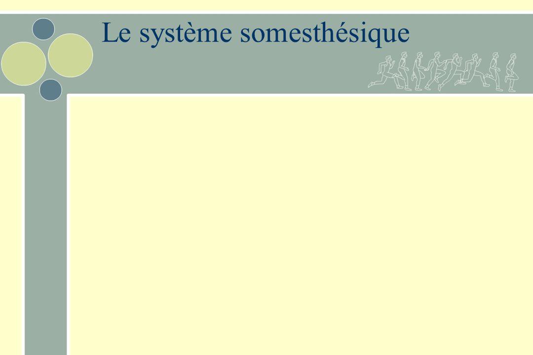 Le système somesthésique