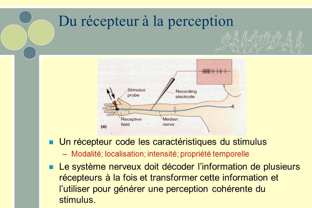 Du récepteur à la perception