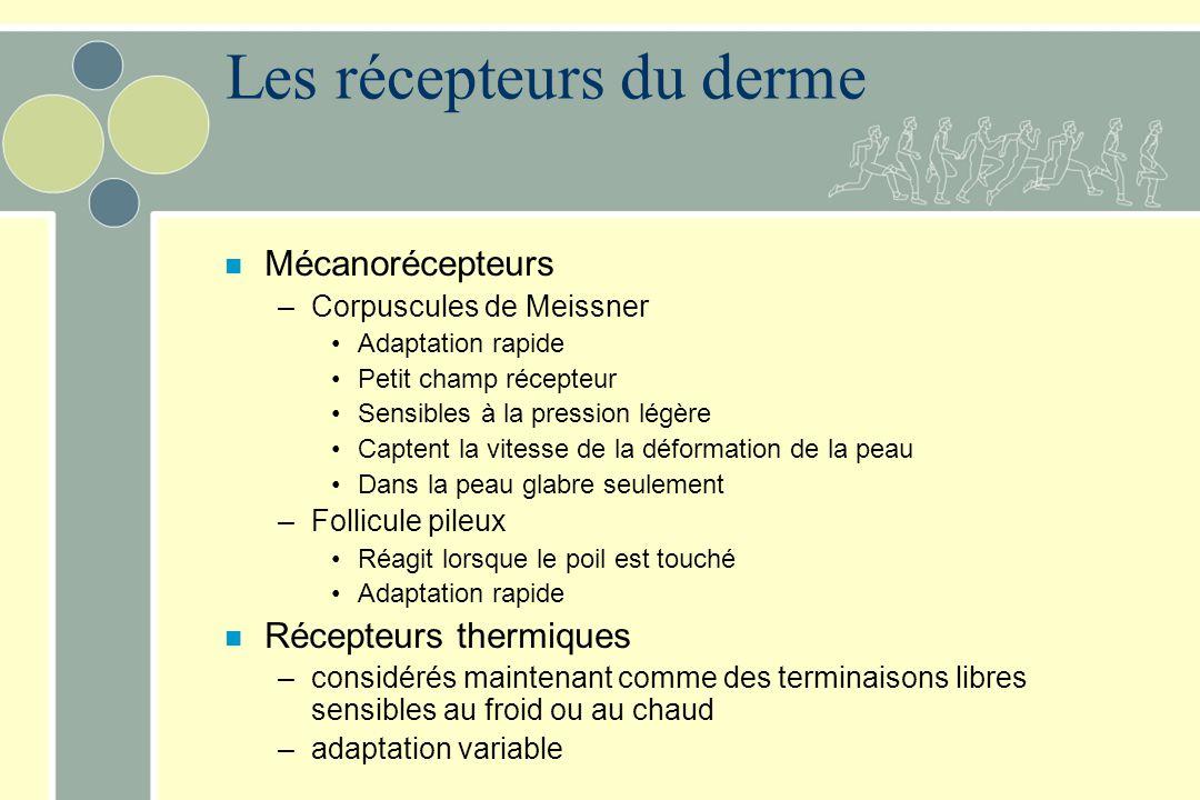Les récepteurs du derme