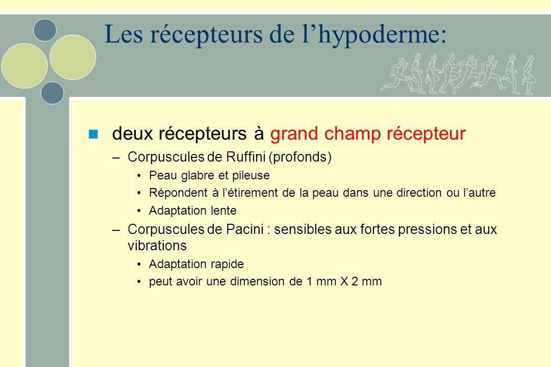 Les récepteurs de l'hypoderme: