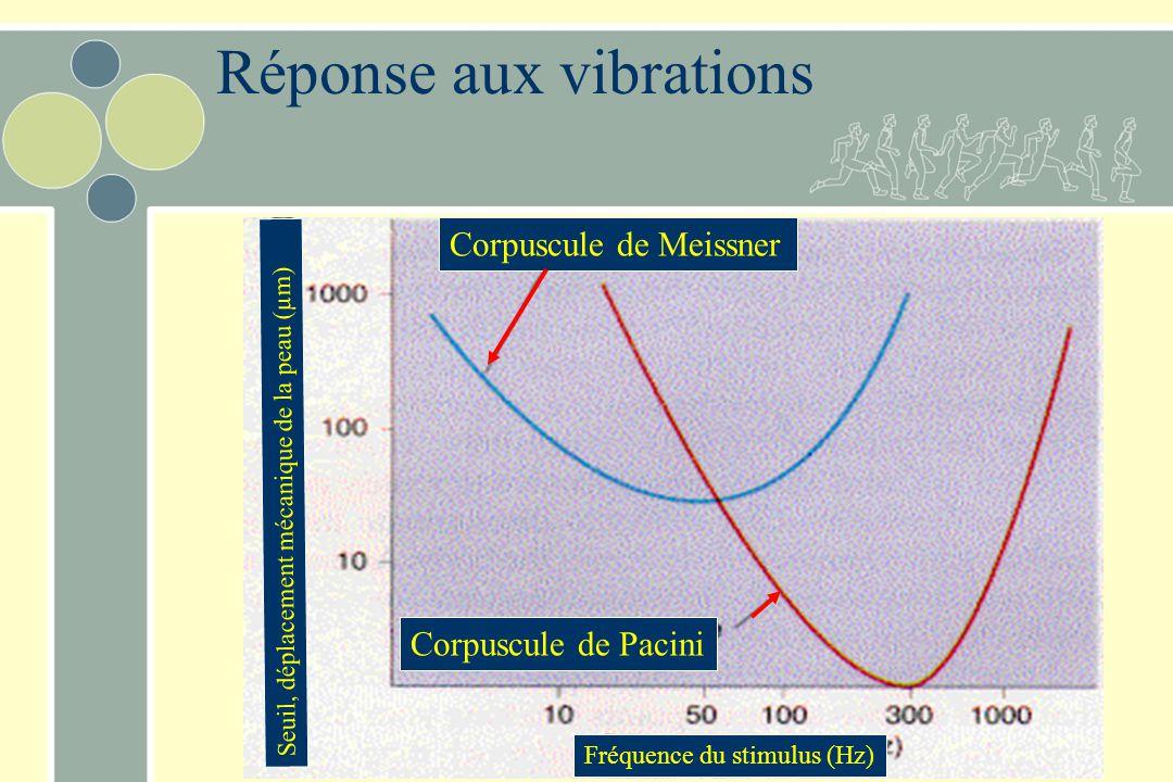 Réponse aux vibrations