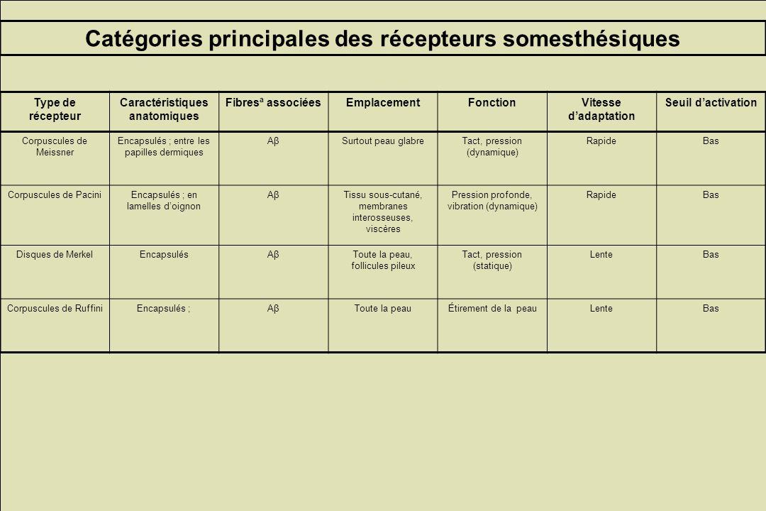 Catégories principales des récepteurs somesthésiques