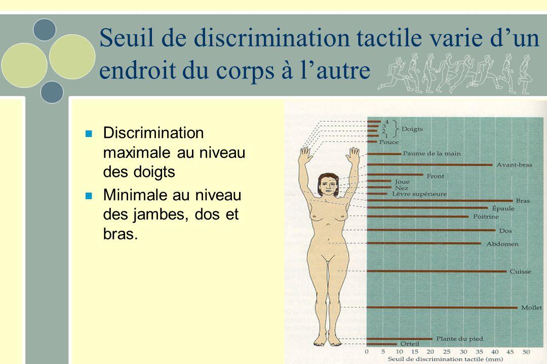 Seuil de discrimination tactile varie d'un endroit du corps à l'autre