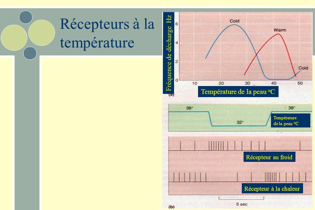 Récepteurs à la température