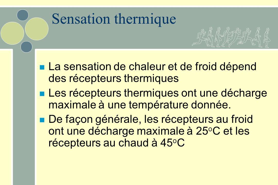 Sensation thermique La sensation de chaleur et de froid dépend des récepteurs thermiques.