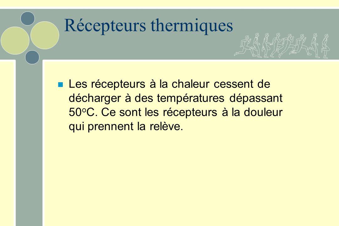 Récepteurs thermiques