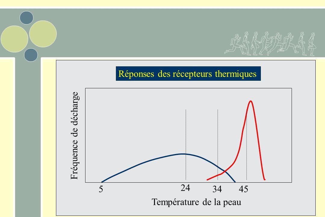 34 5 45 Température de la peau Fréquence de décharge 24 Réponses des récepteurs thermiques