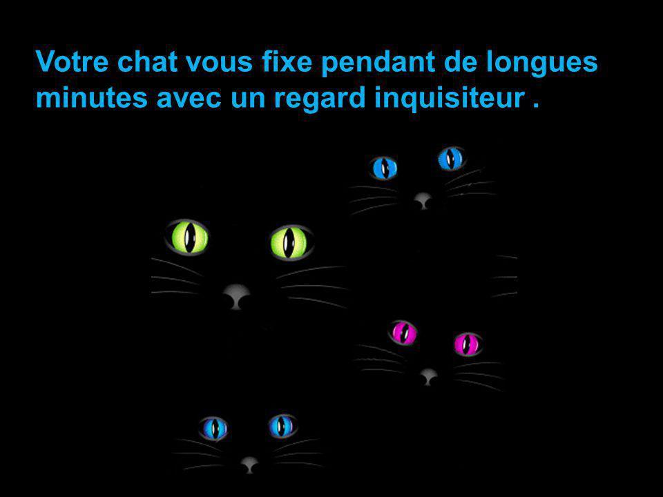 Votre chat vous fixe pendant de longues minutes avec un regard inquisiteur .